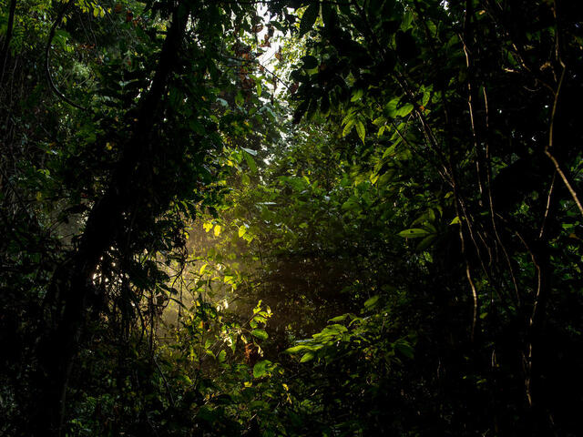 A ray of light shoots through the dark lush forest of Thirty Hills