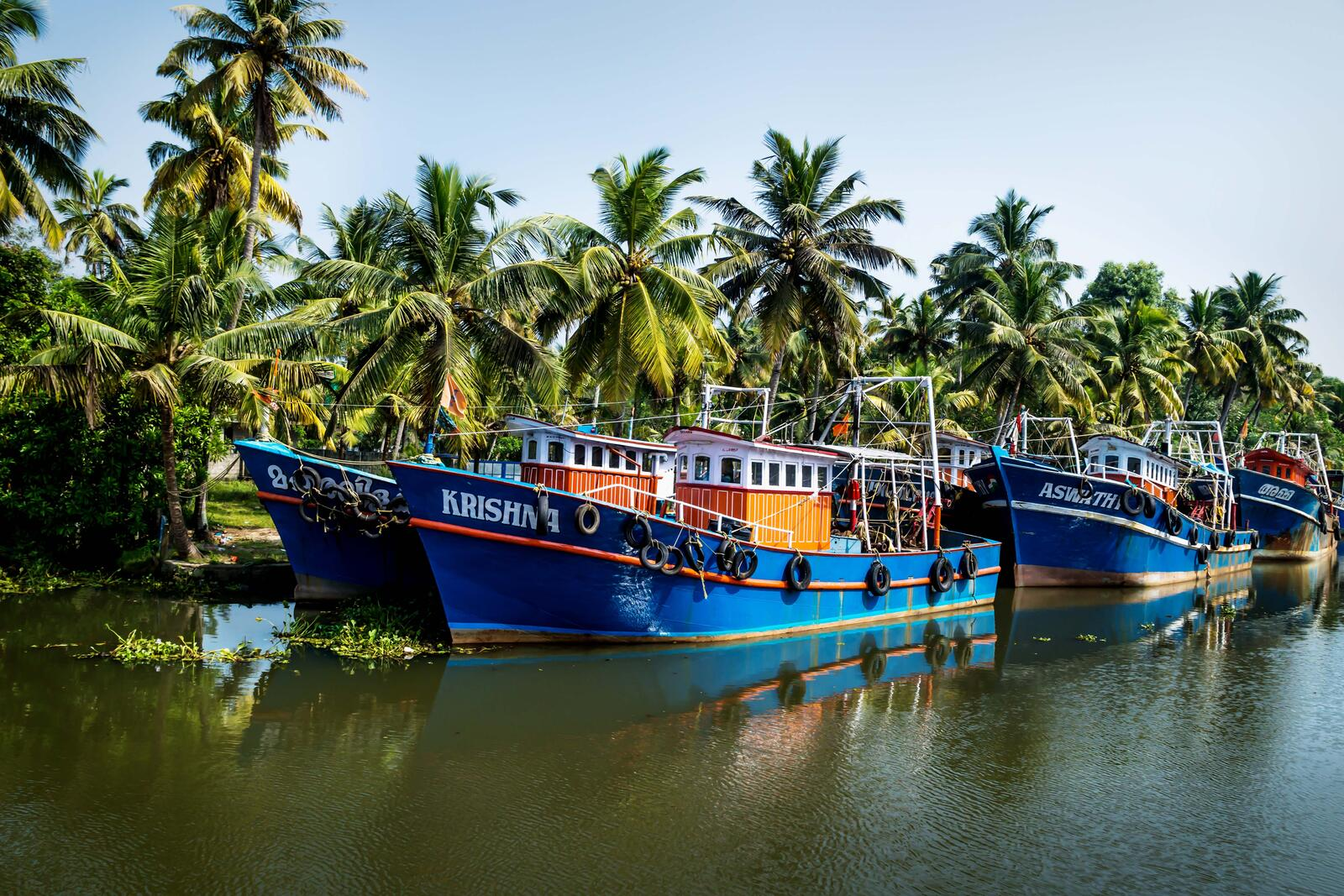 Several fishing boats float in a canal-like space with palm trees in the background
