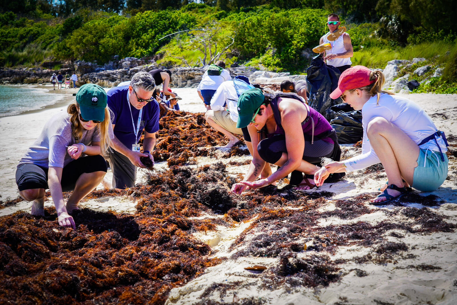Women and a man search through seaweed for microplastics on a beach on a sunny day