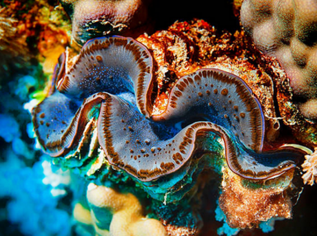 Giant clam.