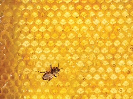 Bees in hive.