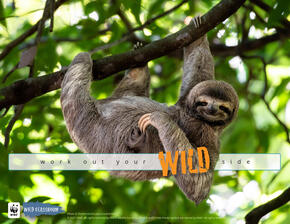 Work Out Your Wild Side Poster featuring a cute sloth hanging on tree branch with funny look on face