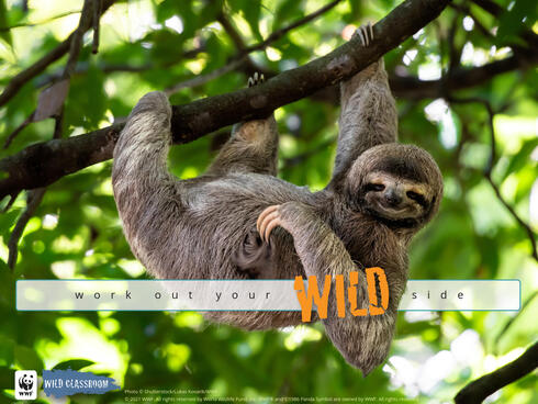 Cute sloth hanging on tree branch with funny face look