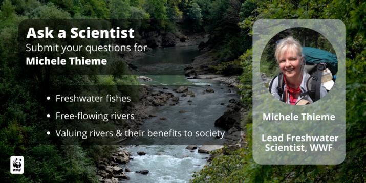 Ask A Scientist panel image featuring Michele Thieme