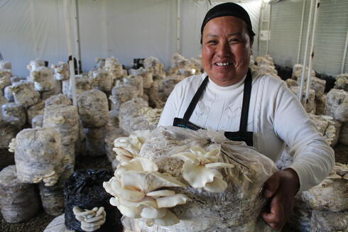 Mushroom production in Mexico