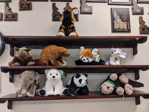 Becky Freiberg's class collection of animal plushes
