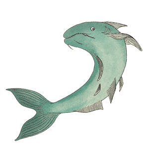 Catfish illustration