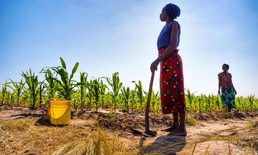 A Zambian woman stands in a maize field holding a hoe. It is a beautiful sunny day. There is another woman standing behind her in the distance.