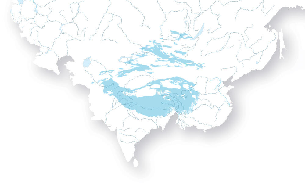 Vector map of the southern half of the continent of Asia. Overlaid on top is the vast snow leopard territory in light blue.