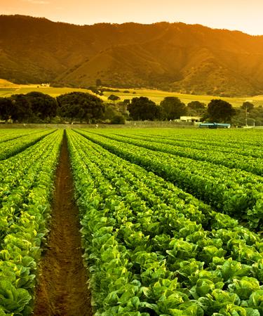 Landscape of farm fields