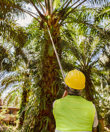 Worker examining tree