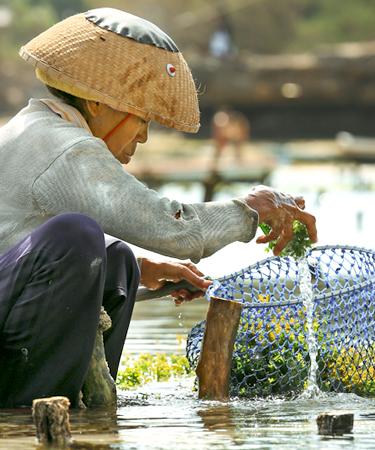 Kneeling woman farming seaweed
