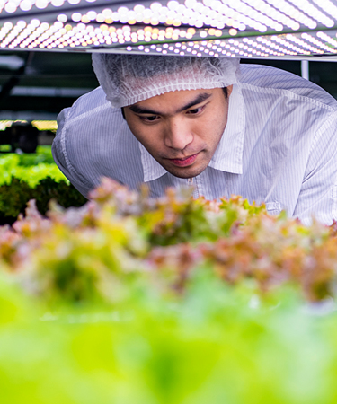 Man examining lab plants