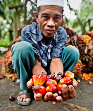 Man holding palm fruit