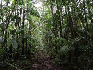 a dirt pathway through a lush green rainforest