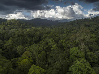 Aerial view of an expansive rainforest with mountains in the background