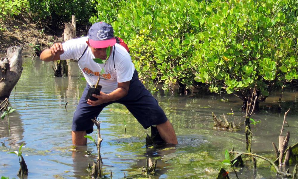 Sibago Mangrove Planting Drive