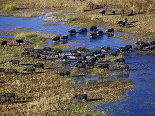 Aerial view of Cape Buffalo