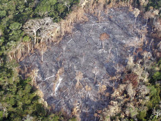 Devastated Amazon forest