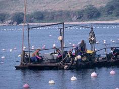 Farmed seafood 08.23.2012 help