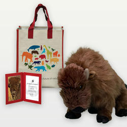Adopt an American Bison