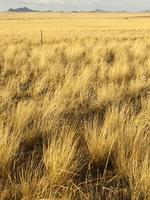 Grasslands - Hero