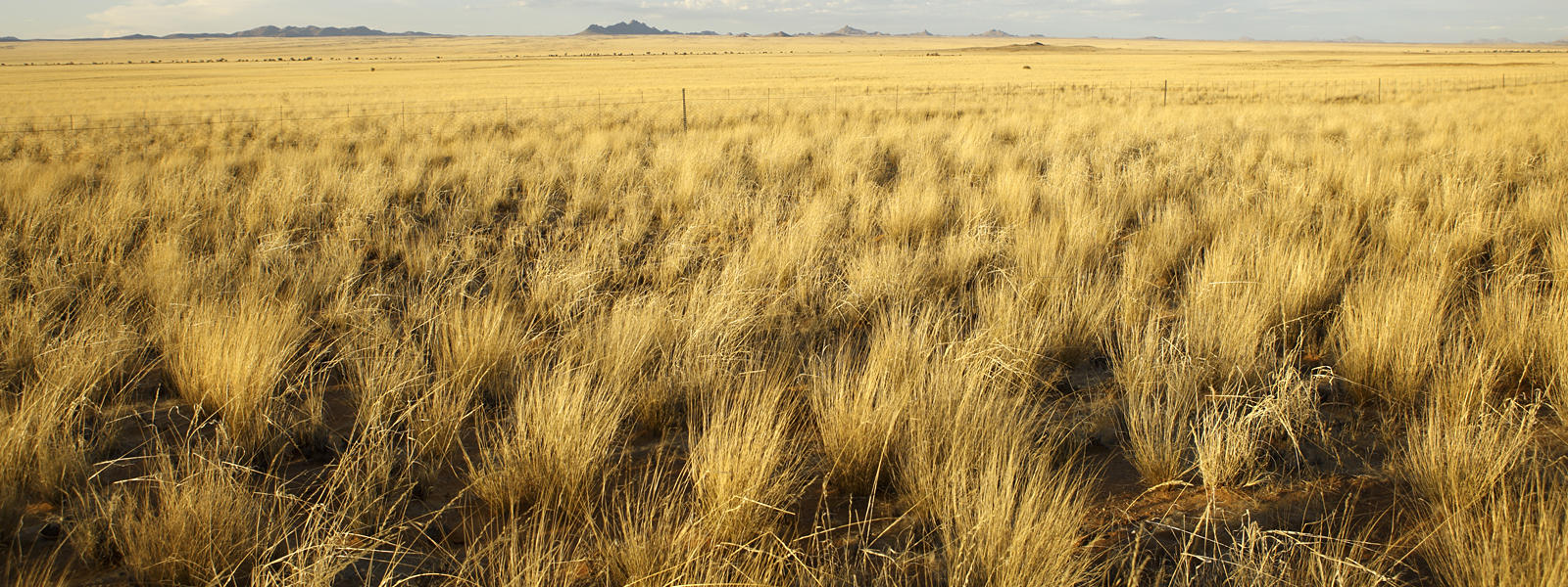 Grasslands Biomes by ert554898   Kristin'-s Grassland Shoebox ...