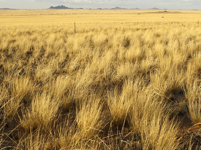 Savanna Grasslands Natural Resources