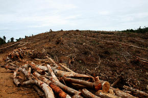 deforestation sumatra GPN247796 threats