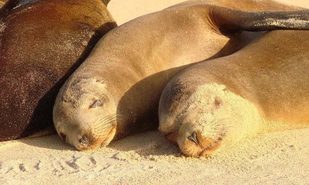 Sea lions on the beach