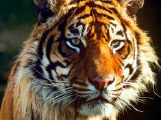 Tiger gpn233596 help