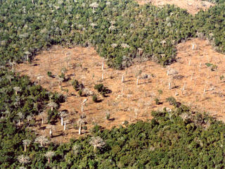 Deforestation in Kirindi forests, Madagascar