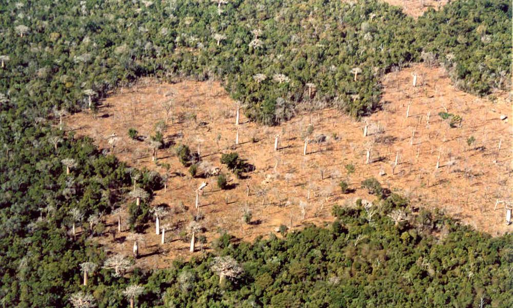 Madagascar | Animals, People, and Threats | WWF