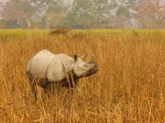 Rhino gpn246034 help
