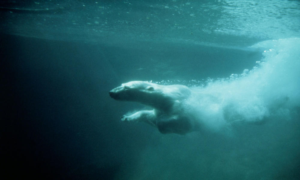 Polar bear threats image4 37027