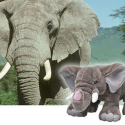 African elephant adoption 11.20.2012 homepage