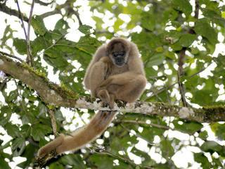 Amazon - Species Image