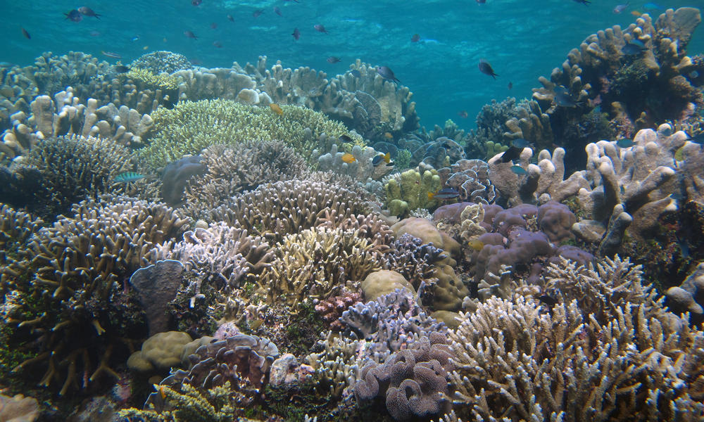 At Work Among The Coral Reefs Stories Wwf