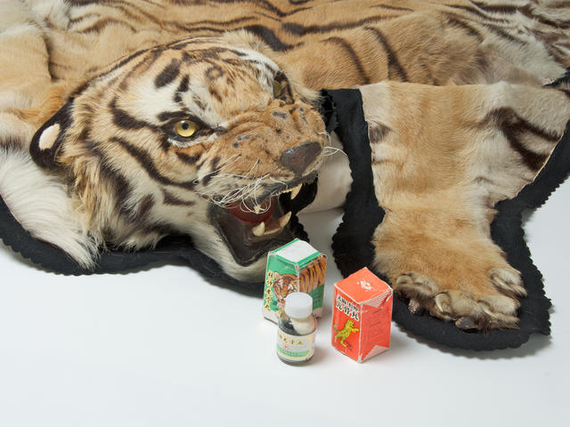 Tiger rug and medicine made from tiger parts