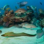 Underwater animals thriving