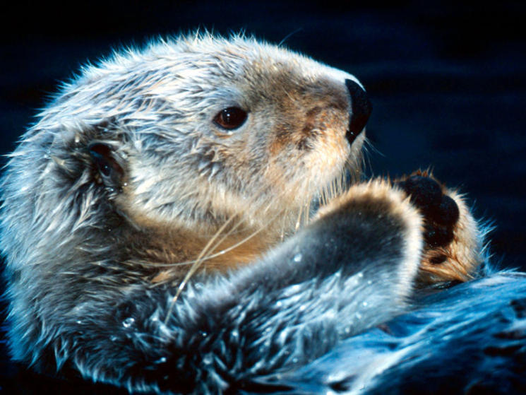 Ten Facts about Sea Otters | Blog Posts | WWF
