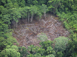 Despite its mighty splendor, the Amazon's forest and freshwater systems are fragile and at risk.