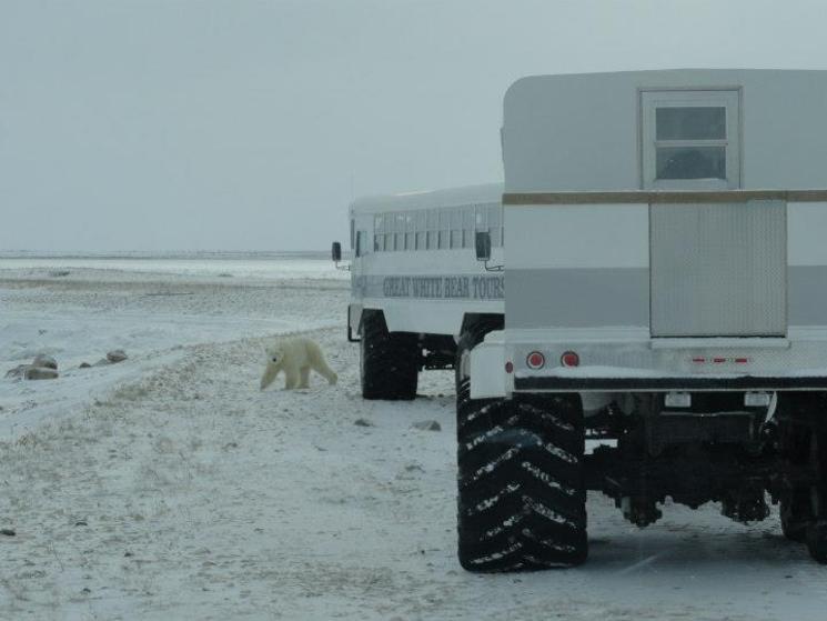 Polar rover?1356855826