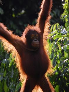 Top Shot Borneo travel blog