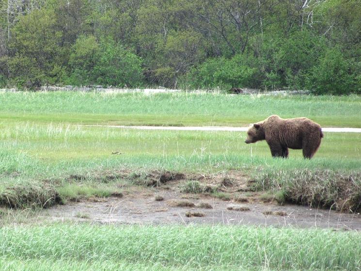 Bear photo