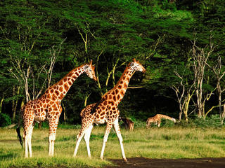 Safaris North South travel blog