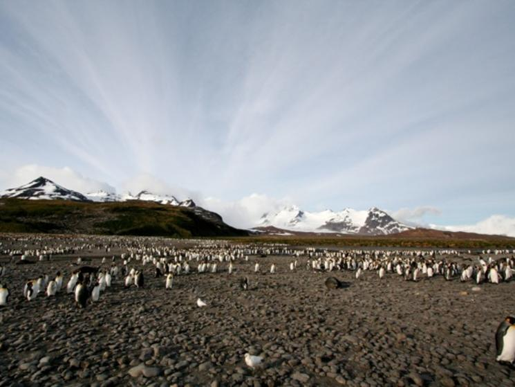 Antarctica photos 128