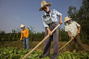 Chinese farmers_1-3-13_232374