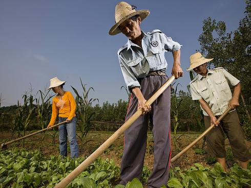 Chinese farmers 1-3-13 232374