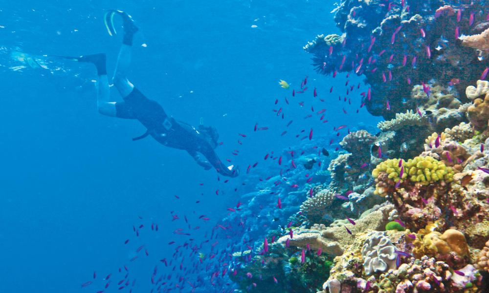 Ashmore reef g.fasanelli %2824%29